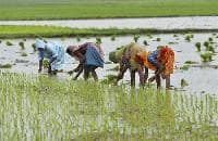 Action soon to introduce crop insurance scheme