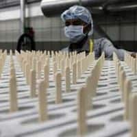 Silver Leaf Oak to buy 10% stake in Syngene for Rs 380cr