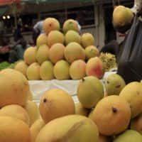 Mango may cost more this yr as production seen down by 20%