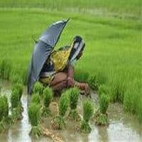 Monsoon on schedule, to hit Kerala by June 5
