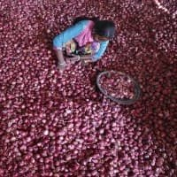 India faces onion crisis, wholesale price touches Rs 50/kg