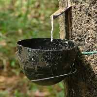 Rubber output could plunge to lowest in nearly two decades