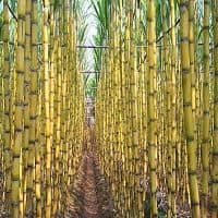 Rs 19,377cr due to sugarcane farmers: Govt