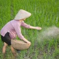 RCF, NFL up 7% as govt notifies new urea investment policy