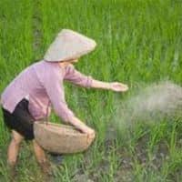 Union Budget 2015: Govt may back off fertiliser subsidy reform