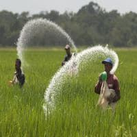 FAI seeks hike in urea prices, decontrol of fertilizers