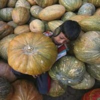 Economic Survey: Food subsidy bill rises by 20% to Rs 1.07 lakh cr in FY15