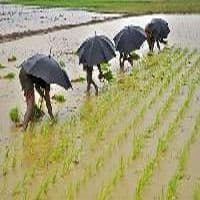 Worse agri damage seen due to rain spell on Mar 8,9: SkyMet