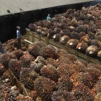 Cash crunch chokes off India palm oil imports