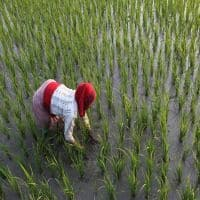 Maharashtra drought-impact: Agriculture sect to decline by 2.7%