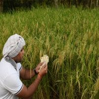 Investor appetite for food, agri biz hits 5yr low in 2016:Report