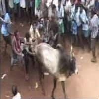Jallikattu bill receives Prez nod; TN CM thanks PM for support