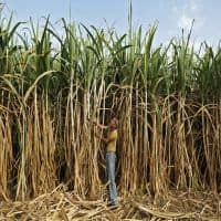 Govt to consider sugarcane price for next season on April 6
