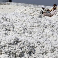 Expect Cotton futures to trade sideways to lower: Angel Commodities