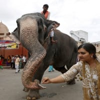Madras HC slams use of elephants to bless people