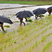 India's monsoon likely to escape El Nino unscathed - IMD
