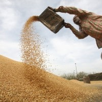 Centre releases Rs 17,994.21-cr for Punjab's wheat purchase