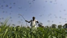 My TV : Can have adverse impact due to GST but nothing in long-term: Insecticides India