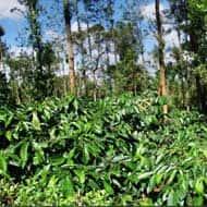 Like Jayshree Tea, VST Tillers may test Rs 2000: Baliga