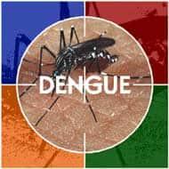 Centre mulls banning rapid dengue diagnostic kits