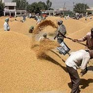 Punjab, HR paddy growers say 'not getting full MSP'