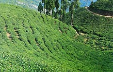 Tea garden workers to benefit from amendment in PL Act: Min