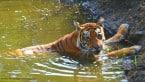 Kanha National Park: What to do in Mowgli's backyard?
